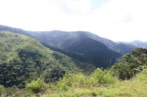 Bukit-Flores